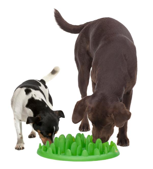 Plastic Dalmatian dog feeder