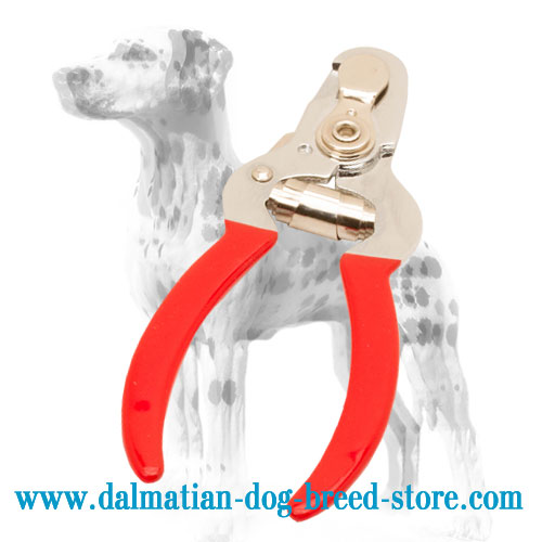 Dog nail trimmer to groom Dalmatian