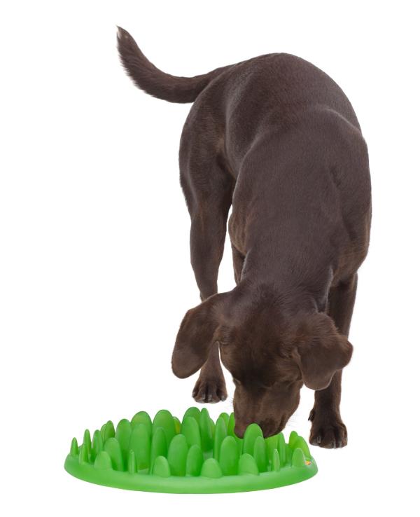 Dalmatian breed Grassy design dog feeder