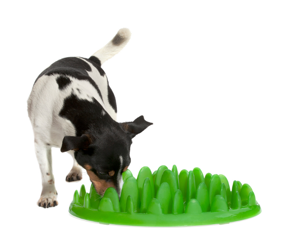 Plastic safe for health Dalmatian per feeder