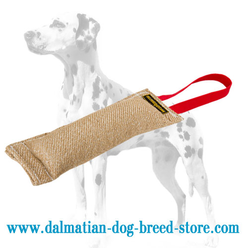 Bite tug of jute for Dalmatian grip development