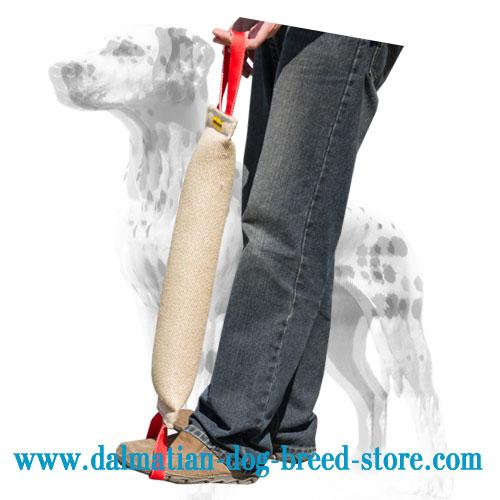 Dog bite tug for Dalmatian better position grip training