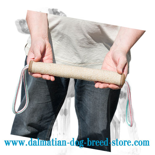 Bite roller of puncture-proof jute for training Dalmatian puppy