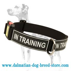 Multifunctional Nylon Dalmatian dog collar