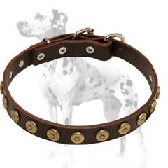 Dalmatian leather dog collar with cool brass dotted circles