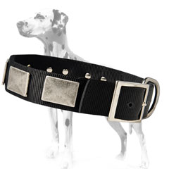Sparkish nylon dog collar for dalmatians