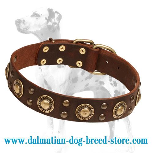 Dalmatian dog collar with decorative brass circles