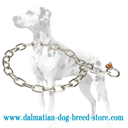 Dog stainless steel choke collar for Dalmatians