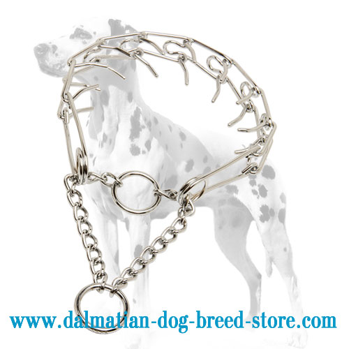 Dog prong collar for Dalmatian obedience training