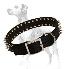 Dalmatian nylon dog collar with cool spikes