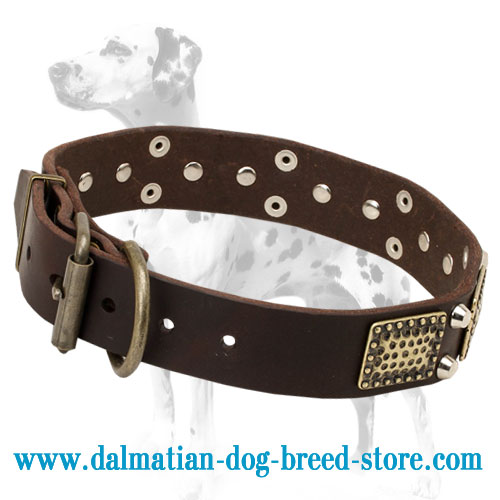 Dog collar with unusual adornment