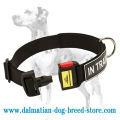 Extra durable nylon Dalmatian dog collar for walking