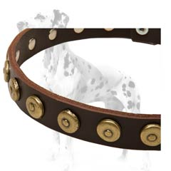 Dalmatian leather dog collar for daily use