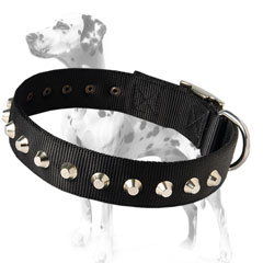 Durable fashionable Dalmatian dog collar