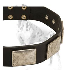 Cool-looking Damatian leather dog collar with vintage plates