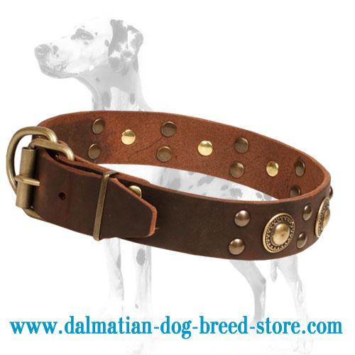Dog collar, superb adornment