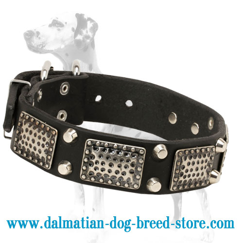 Dog collar with exclusive adornment