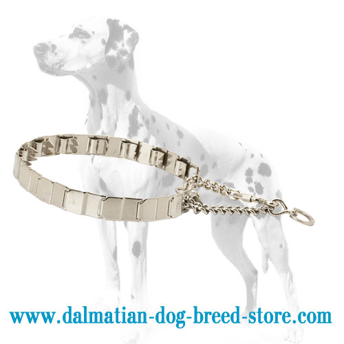Dog pinch collar for Dalmatian, natural influence
