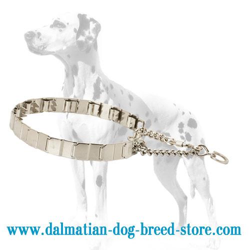 Dog pinch collar for Dalmatian, natural influence