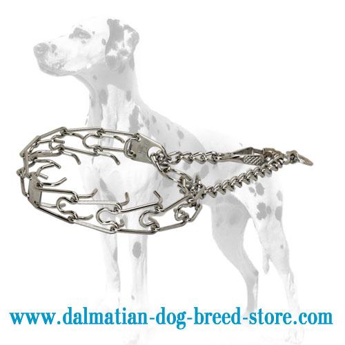 Dalmatian dog pinch collar of rustproof steel