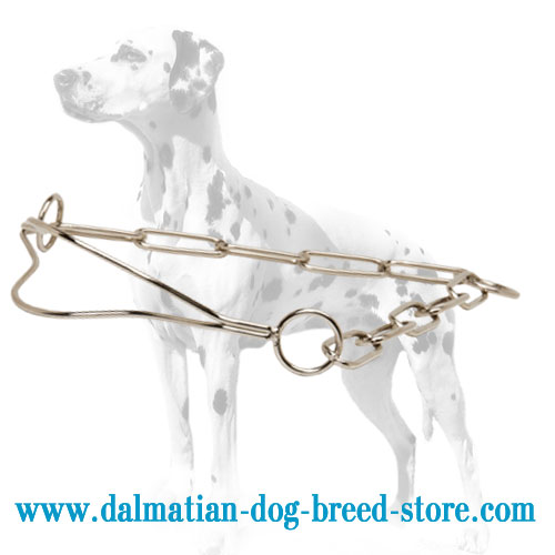 Dog chrome plated collar for Dalmatians, meant for shows