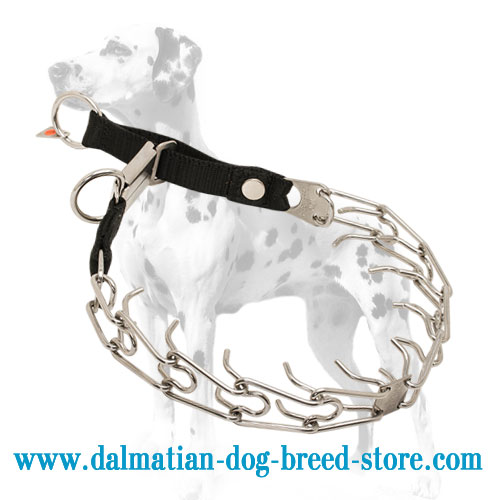 Dog prong collar for Dalmatians, shiny stainless steel