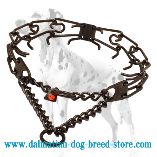 Effective dog pinch collar for Dalmatians black-covered stainless steel
