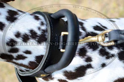 Dalmatian dog collar for Dalmatian activities