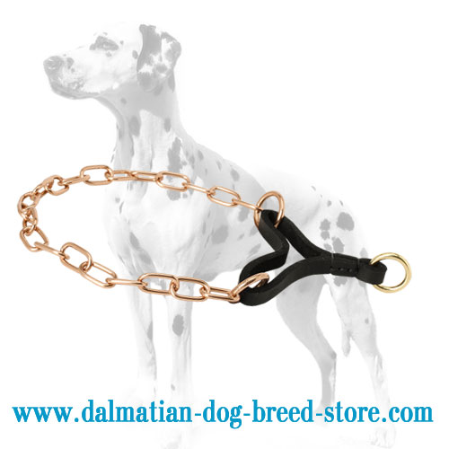 Curogan training Dalmatian choke collar