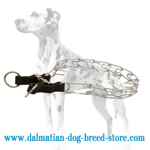 Chrome-plated pinch collar for Dalmatian