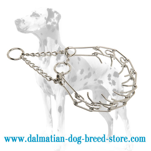 Dog pinch collar for Dalmatians, evenly arranged prongs