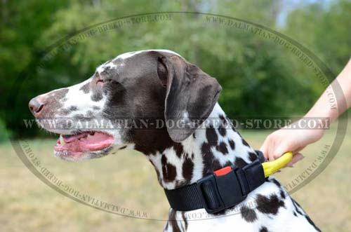 Dalmatian nylon collar for walking
