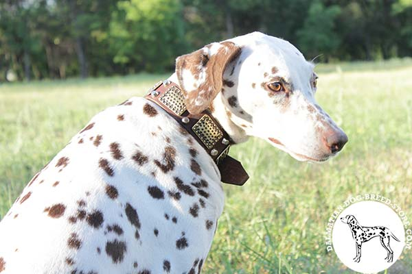 Chic leather dog collar for Dalmatian with plates and pyramids