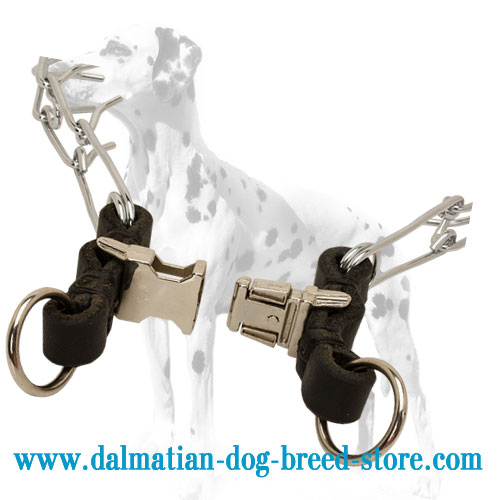 Quick-release buckle on chrome-plated Dalmatian training dog pinch collar
