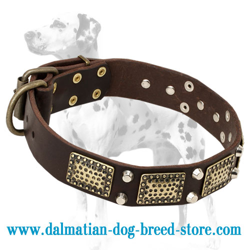Dalmatian dog collar of genuine leather