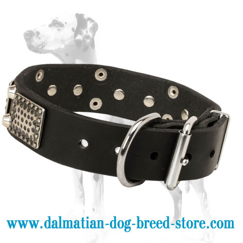 Dalmatian dog collar with stylish adornment