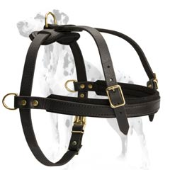 Dalmatian breed leather harness