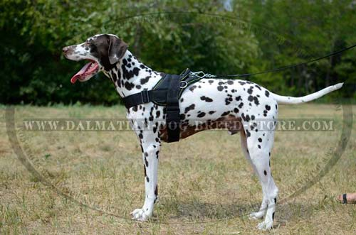 Comfortable Dalmatian nylon harness