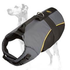 Perfect nylon harness for Dalmatian dog