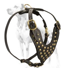 Dalmatian breed durable leather harness