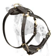 Dalmatian popular leather harness