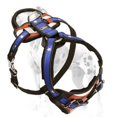 Dalmatian harness with safe felt padding