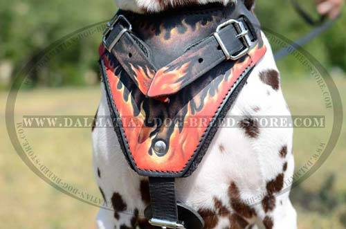 Dalmatian soft leather harness