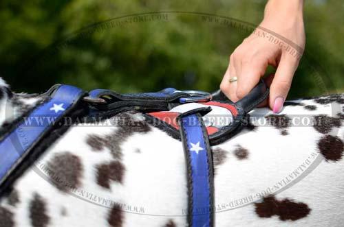 Dalmatian classy leather harness