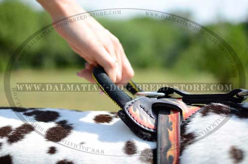 Dalmatian Harness with soft felt padding