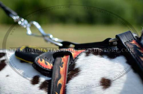 Dalmatian leather harness with D-ring for leash