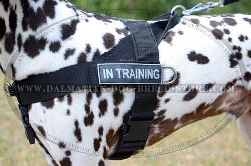 Comfy harness for Dalmatian with id patches