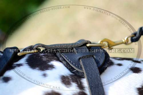 Dalmatian leather harness with brass D-ring