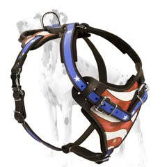 Genuine leather harness for Dalmatian