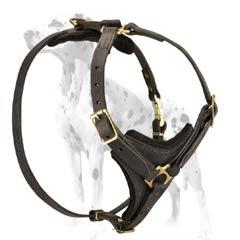 Dalmatian leather dog harness